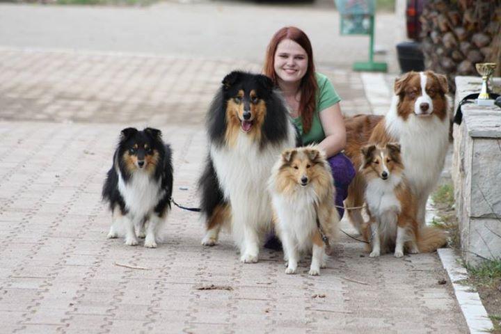 Vystavování psů
