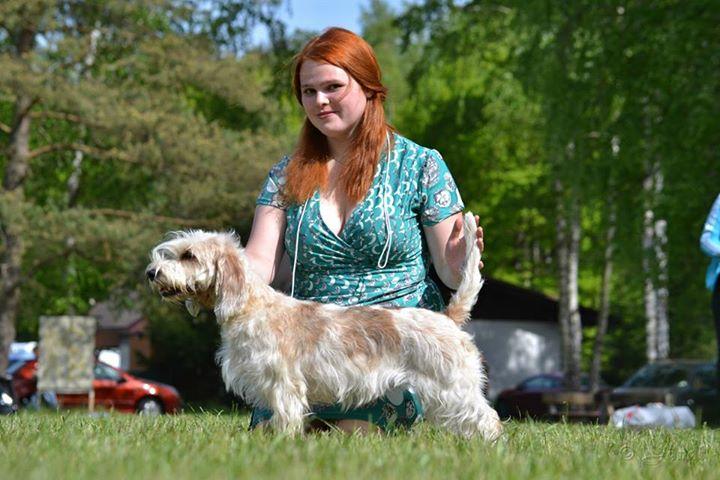 Handling psů